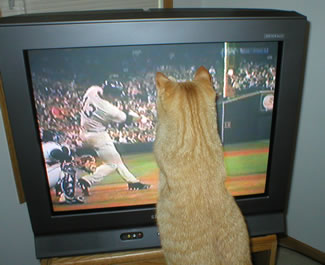 A-Rod the cat meets A-Rod the ballplayer, who is hitting a home run against the Mariners